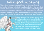 winged wolves discrption